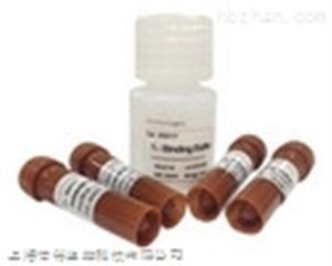 Cerberus蛋白(CER)单克隆抗体