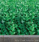 绿化防寒布价格