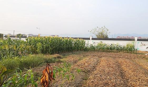《农业资源及生态保护补助资金项目实施方案》全文