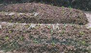 南京土壤所在施硒降低水稻对镉的吸收机理上取得进展