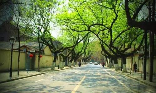 建筑 绿色环保 > 因地制宜建设海绵城市 南京采用路面透水设计