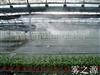 广州增城菜苗种植大棚喷雾降温