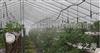 广州越秀公园温室植物喷雾加湿工程